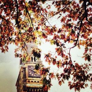 Fall Healy